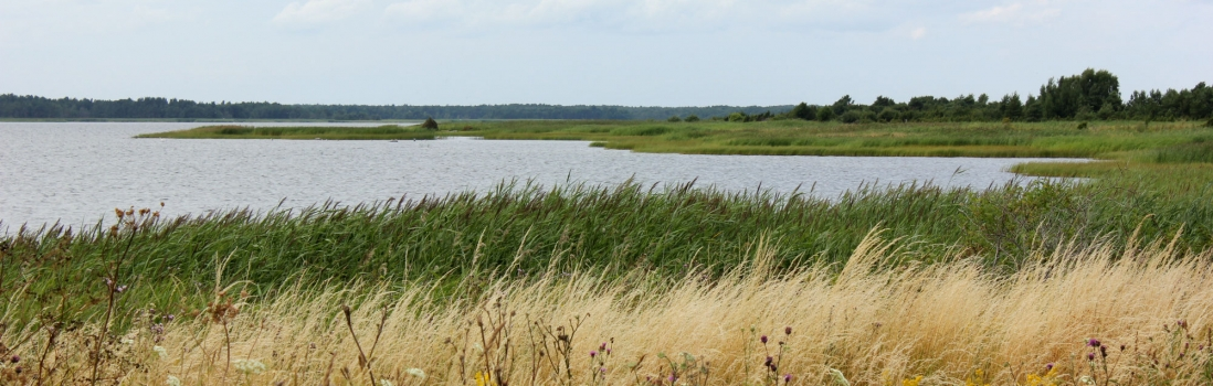 My travel guide to Estonia – Part 2: Pärnu, Saaremaa and Haapsalu